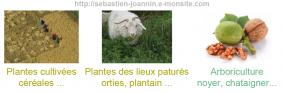 les-taxons-anthropiques.png